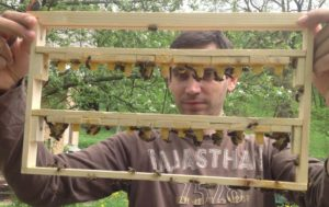 včelárska farma Šútorka - chov matiek